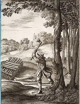 Hacer leña del árbol caído